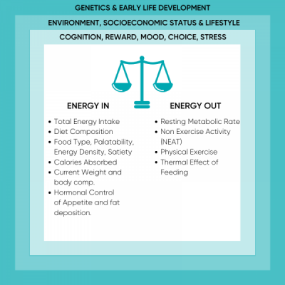 Factors Influencing Energy Balance