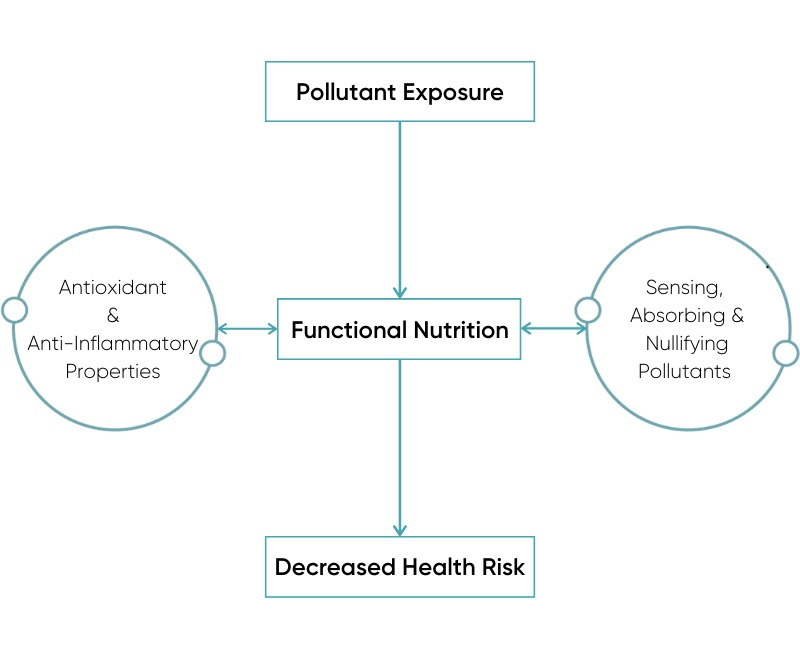 Functional Nutrition and Pollutant Interaction