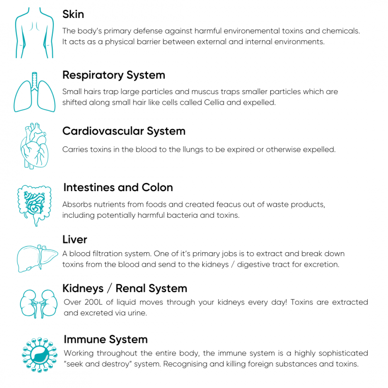 The Body's Natural Detoxification Systems