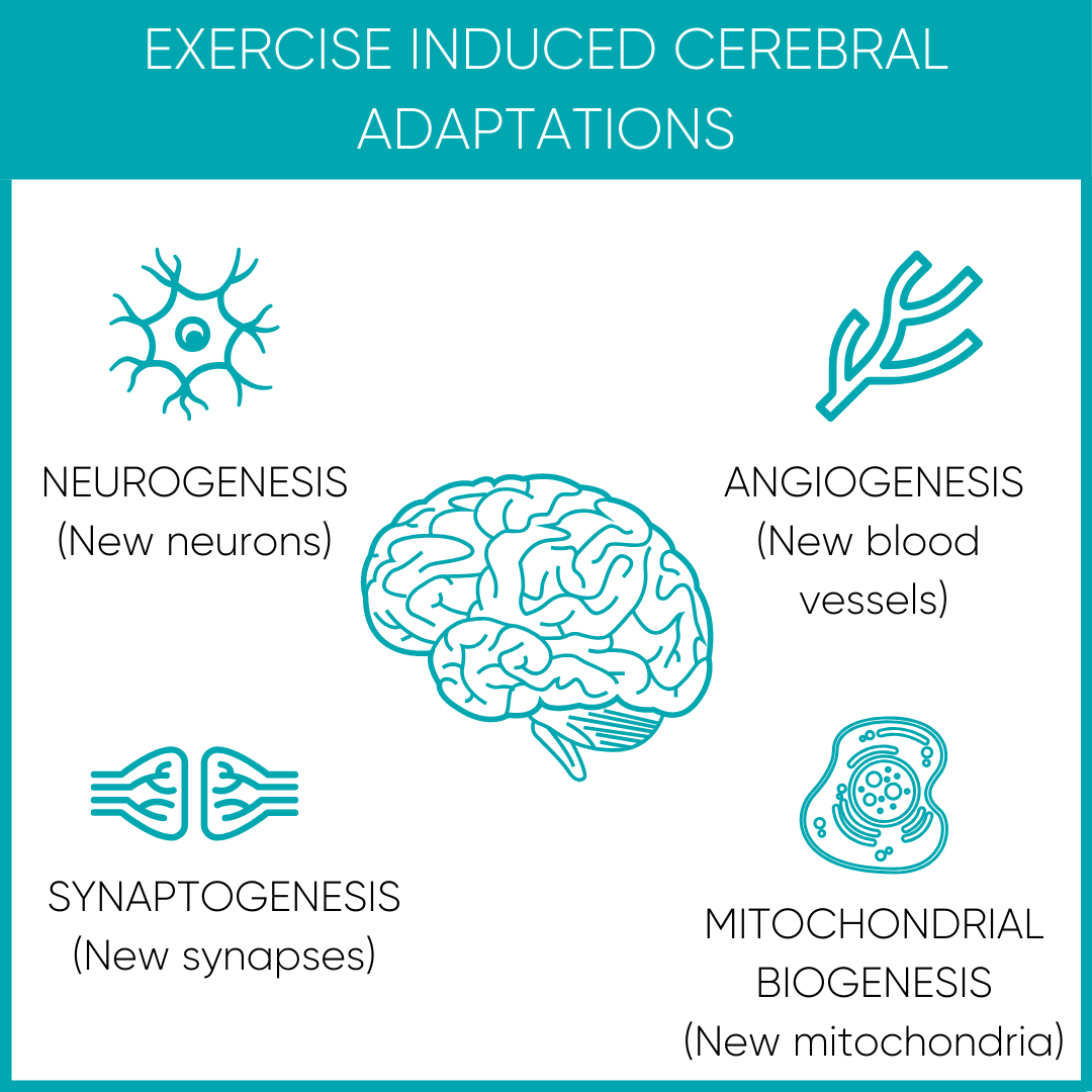 Exercise Effect on the Brain
